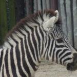 動物園で楽しむ!動物園で過ごす一日を充実させるには?【遊園地なしプラン】