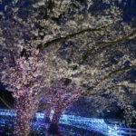 夜桜ナイトZOOに行ってきた【2019】