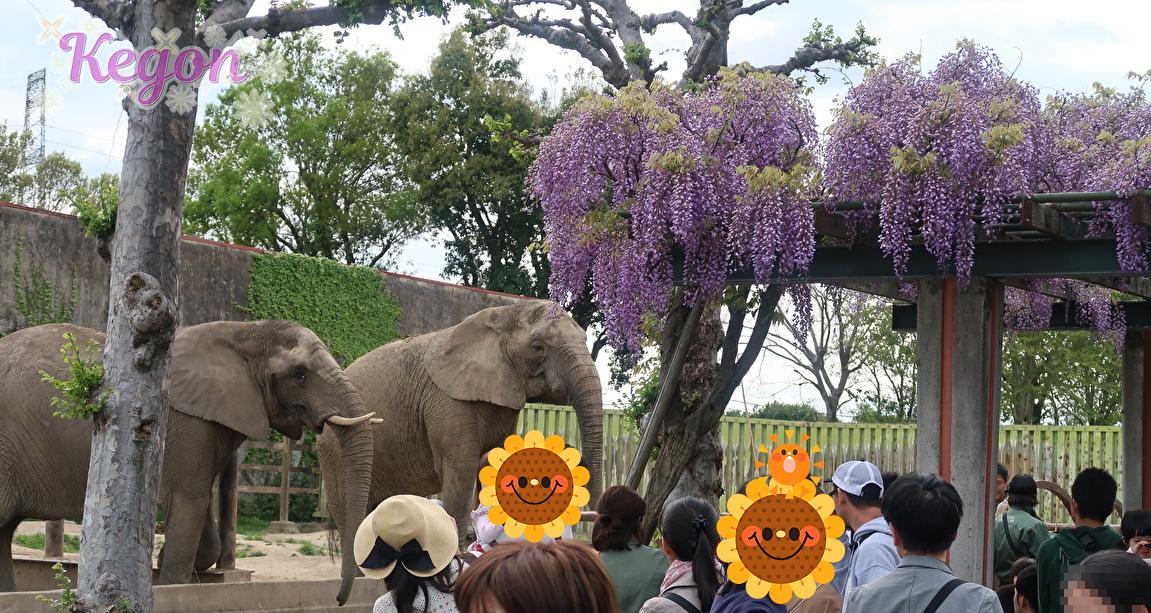GWの東武動物公園の体験イベントや混雑情報【2019】