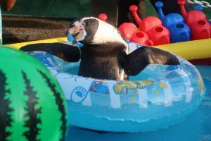 打ち水オットセイペンギン