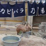 東武動物公園のカピバラ温泉@リスザルの楽園【2020】