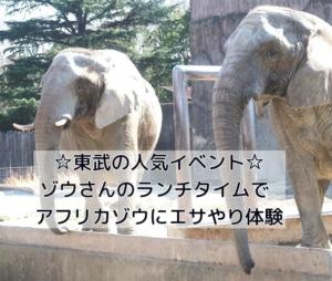 ゾウさんのランチタイムでアフリカゾウにエサやり体験